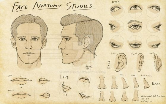 3Dsense - Face Anatomy Studies by SSgt-LuLZ