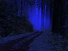 Forest at night by FFKHMon
