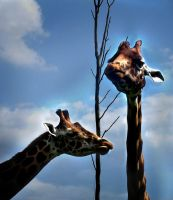 Giraffes by Ionday