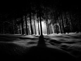 In the shadows.. by dimitarmisev