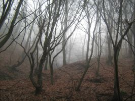 UNRESTRICTED - November '09 - Foggy Forest 1 by frozenstocks