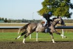 Gray Thoroughbred 002 by diamonte-stock