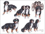 Bernese Mountain Dogs by Bafa