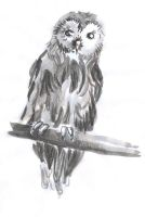Ink Tawny Owl by Thinderil