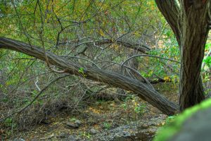 Some tree by ajithrajeswari