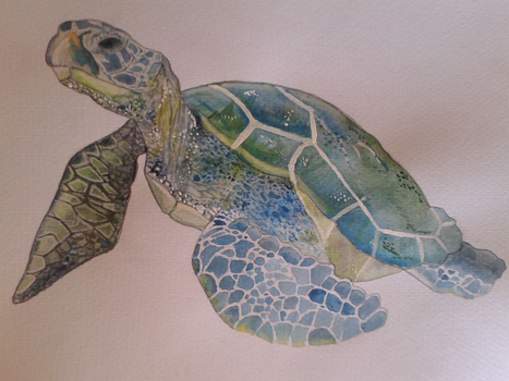 Sea Turtle by SophiaArtist