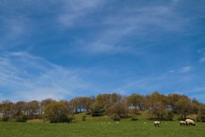 Field of sheep on a sunny day by Geater