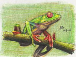 Red Eyed Tree Frog by Marioshi64