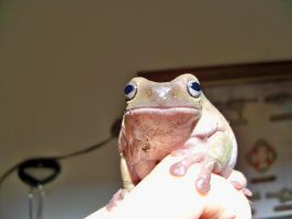 Arlo the Frog by RollingFrog