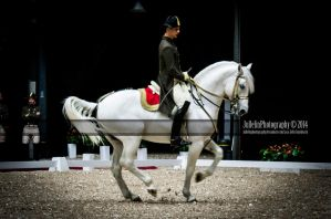 Spanish Riding School 1 by JullelinPhotography