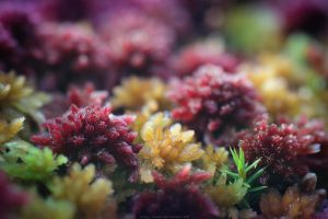 Planet Moss by DaXXe