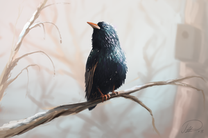 Starling by Patriartis