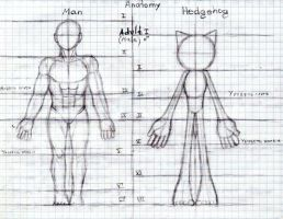 Male character proportion by sensum