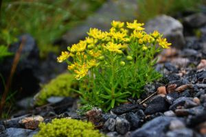 yellow flowers by Blue-Norway