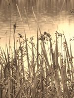 SUMMERS END ( SEPIA ) by ANDYBURGESS