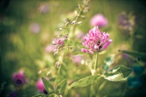 Mauve flower by lalylaura