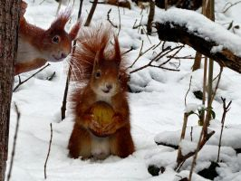 squirrel 8-9 by cundrie la surziere-montage-No by Artemiche