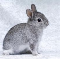 Little baby bunny by MartinePersson