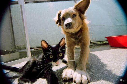 Brothercat And Brotherdog by hria