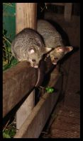 What are we looking at? by yepyepyep
