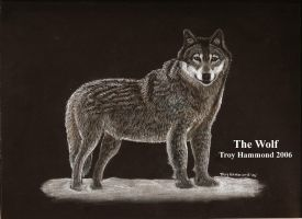 Wolf by cokeglass