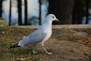 Seagull Unrestricted Stock by micheleoxton