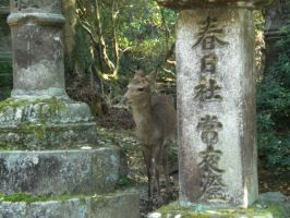 japanese deer by wildwolves