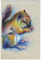 Squirrel 01 by nuances-curieuses