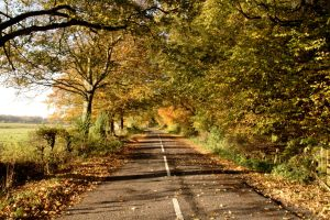 Autumn Road by GailJohnson