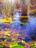 Blue Swamp by flamingpig