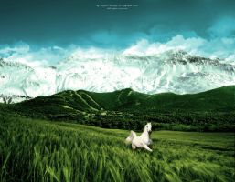 white horse by kingsandji