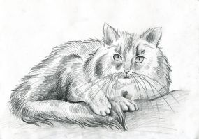 Kitty cat - sketch by IllegalHamster