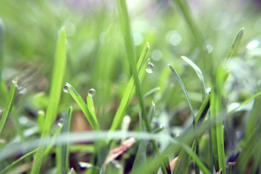 Rainy grass by Claire991