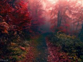 Colorful Nature by Weissglut