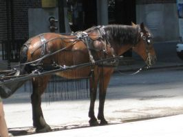 Carriage Horse 2 by lee-mare