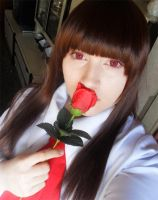 Red Rose by BlackLadySango