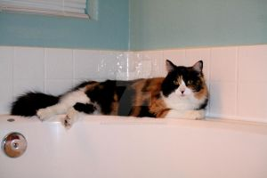 Toola laying by the Tub by creativesnatcher69