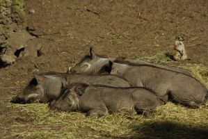 Pumba and Timon's by marob0501