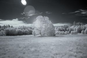Infrared by Panoram