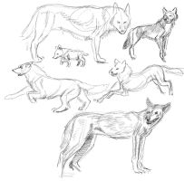 Wolves sketch by ksheridan