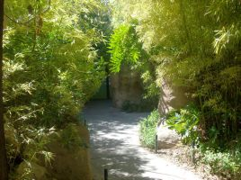 Look a jungle in Tucson by SquirrelWitch