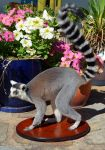 Ring-Tailed Lemur Taxidermy by Tea-and-Taxidermy