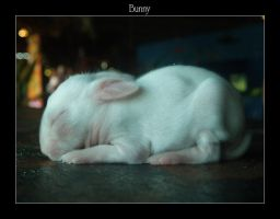 Bunny by wanchenghuat