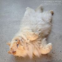 Cat Rolling Over 2 by Kumiko-Art