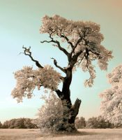 Psyche Tree - Revisited by vodmor