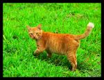 The Orange Cat by Loneffect