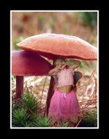 Toadstool Fairy Surprise by BFG