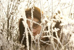 white frost 5 by bellalleb-stock