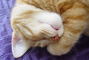 sleepy time paw 2 by lucytherescuedcat