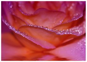 Rose jewels by Nataly1st
